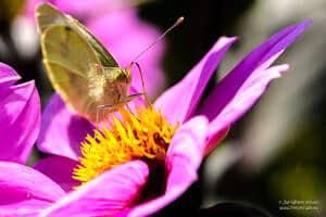 Macro photos of butterflies