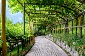Walkway with grapes